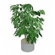 planta-interior-hoja