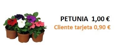 Petunia 1,00 - 0,90