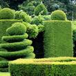 plantas-de-seto