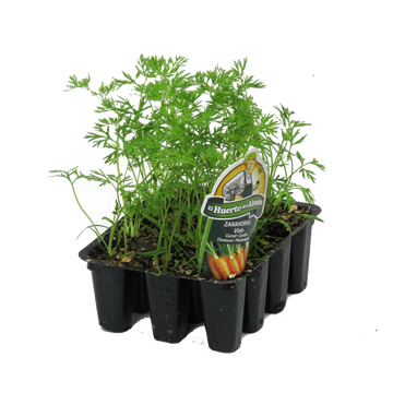 Planta De Exterior - Plantas De Huerto - Zanahoria Bandeja 12 Plantones