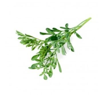 Planta De Exterior - Plantas Aromaticas Ecologicas - Ruda Ecologica Maceta 11cm