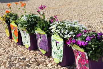 Planta De Exterior - Plantas Vivaces - Plantas Vivaces
