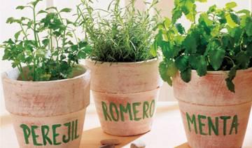 Semillas - Semillas Plantas Aromaticas - Semillas Aromaticas Batlle