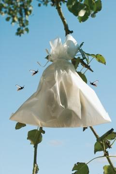 Complementos Jardineria - Cubiertas Y Protecciones - Bolsa Proteccion Fruta 20x30cm 50uds